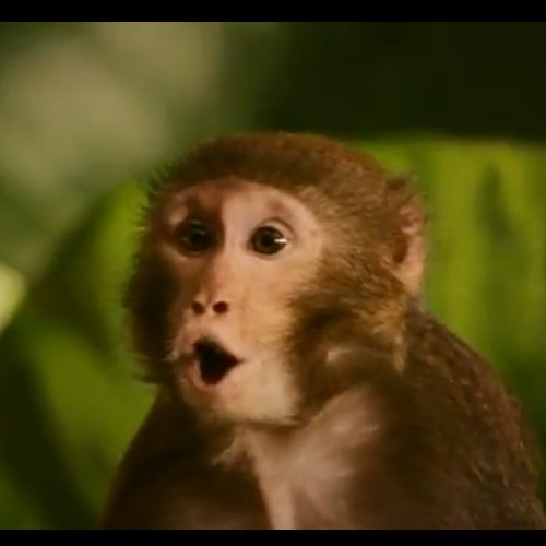 Monkey Thieves